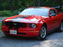 My new stang
