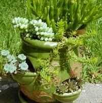 Succulent pot.