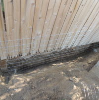 dug 50 feet of trench, 2 feet deep, along fence line outside of dog yard and buried wire fencing down into concrete to keep coyotes from digging in (and dogs from digging out)... a LOT of work!