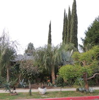 One of last shots of yard before leaving (some plants already removed)