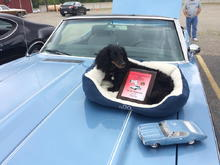 """My guard dog """"Ruby"""" did her part to greet all visitors. I think she was also helped sway the judges vote my way.  The 1/16 model 1969 442, is a module I bought a few years ago.  I really liked this color, so I had the paint shop match the paint."""