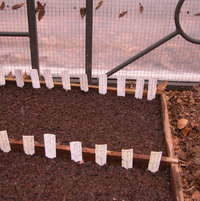 Seed flat in cold frame