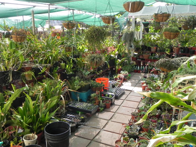 ummm...Do I maybe have too many plants???