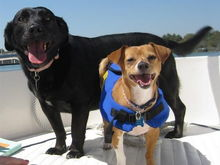 stumps and hudson on boat (Small)